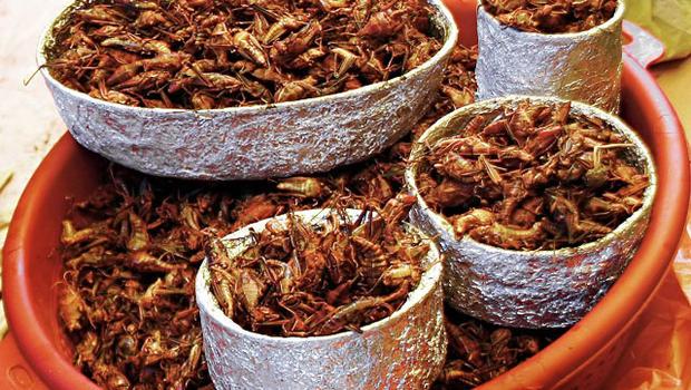 U N Insects U N  agency urges eating