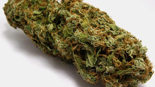 marijuana_buds_000004773560.jpg (620×350)