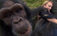 Goodall's baby chimps at play