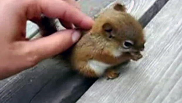 Cute Squirrel Baby Probably the cutest baby