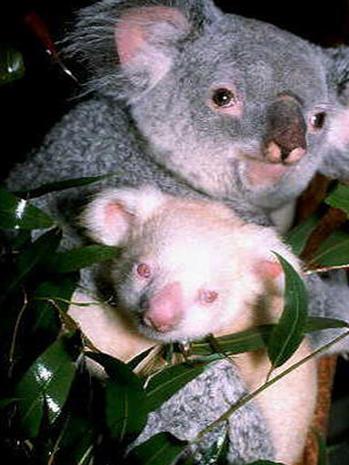 Rare albino animals