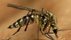 Dallas officials spraying to stop West Nile Virus