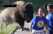Buffalo charges family at Yellowstone