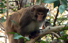 On the Road: Missing monkey captivates Floridians