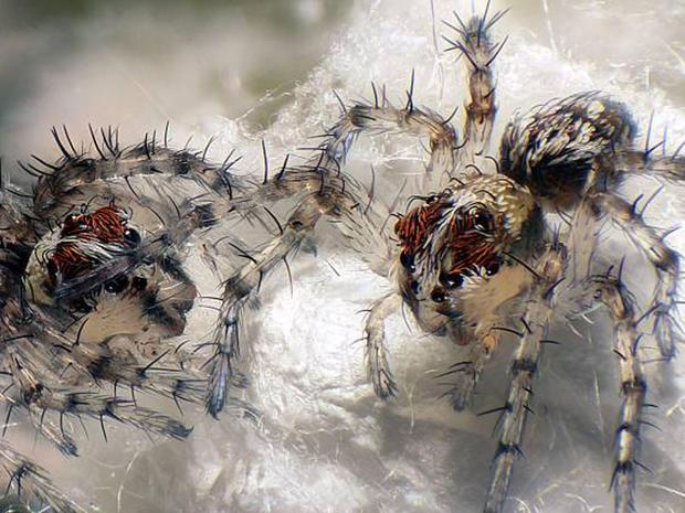Microscopic beauty: Prize-winning photos