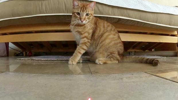 image Cat vs laser pointer