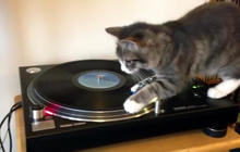 "A feline ""spin"" on Bob Marley"