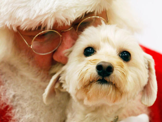 High-tech gifts for pets
