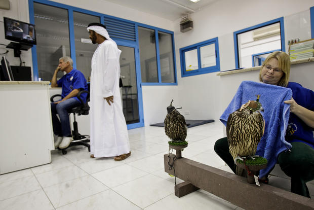 Falconry in Dubai