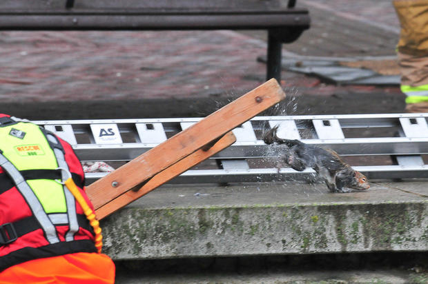 U.K. fire brigade rushes to squirrel's rescue
