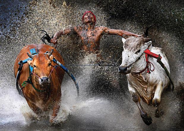 World Press Photo winners
