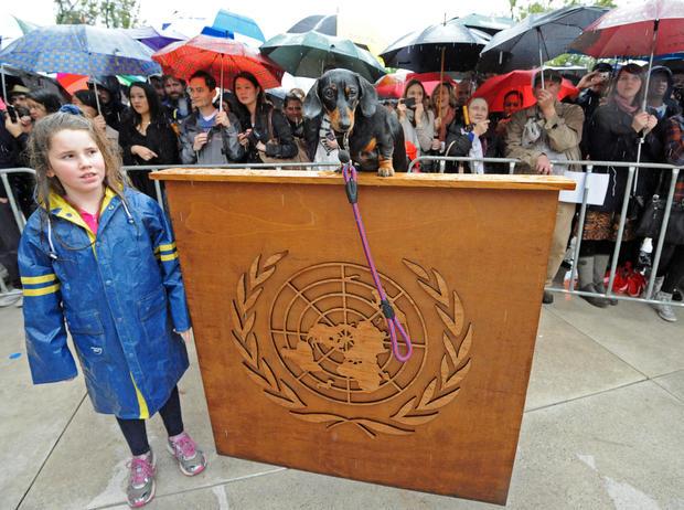 Dachshund United Nations