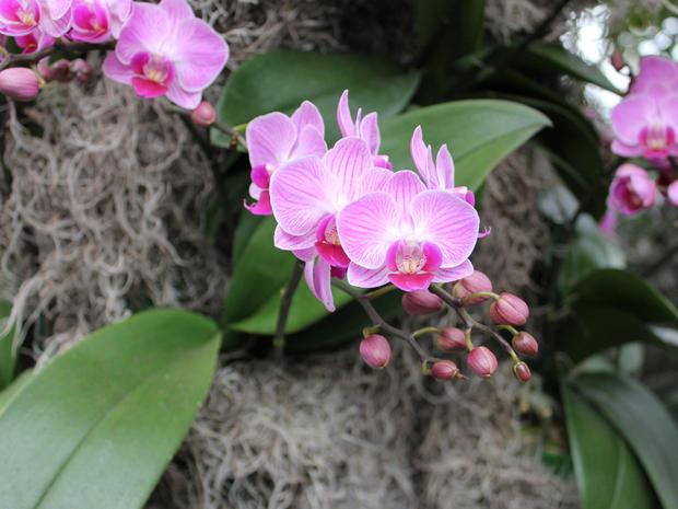 Orchid extravaganza at New York City Botanical Garden