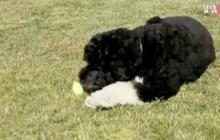 First dog Bo hunts Easter eggs