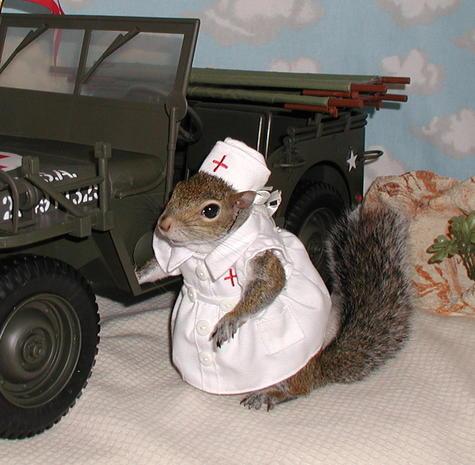 Squirrel Sugar Sugar Bush Squirrel Volunteers