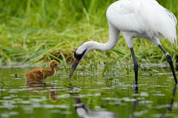 Joel Sartore's migratory birds