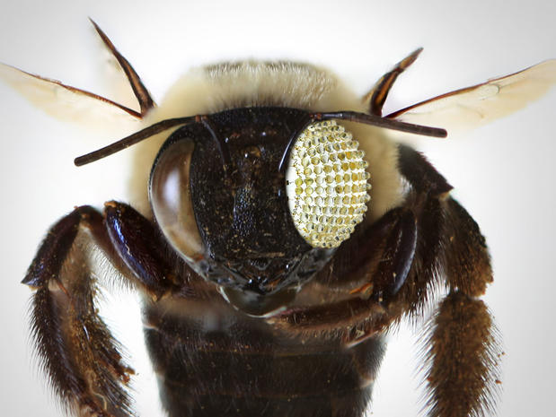 Bug's view inspires new camera lens