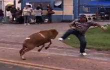 Goat goes on rampage in Brazilian town