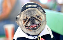 World's Ugliest Dog Contest 2013