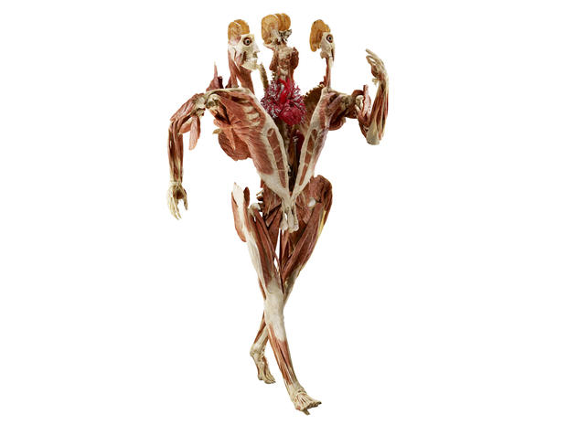 """Inside """"Body Worlds: Pulse"""""""