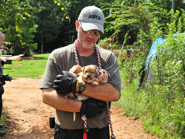 367 dogs rescued in multi-state dog-fighting case