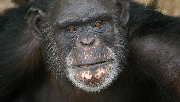 should animals have the same rights as humans? essay The issue of animal rights is often pictured as an irreconcilable battle between those who believe that animals should not be eaten, used for experiments, kept as pets, or made subservient to human beings in any way, and.