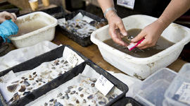 Artifacts gathered from an archaeological site known as Blick Mead are cleaned and sorted in Amesbury, England, in this Oct. 13, 2013, picture provided by The University of Buckingham.