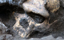 Ancient skull reveals new clues in human evolution