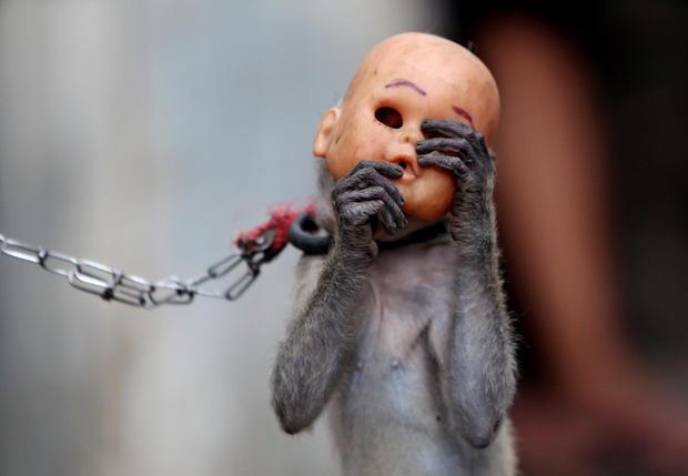 Crackdown on monkey business