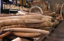 Six tons of illegal ivory destroyed as protest against poaching
