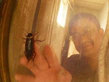 cockroachscreen.jpg
