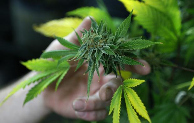 High Times: Marijuana Crimes