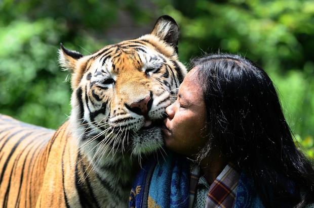 My best friend, the tiger