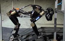 """Robot designers go ape over """"Charlie"""""""