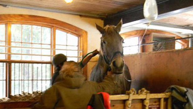 crop.horse3.jpg