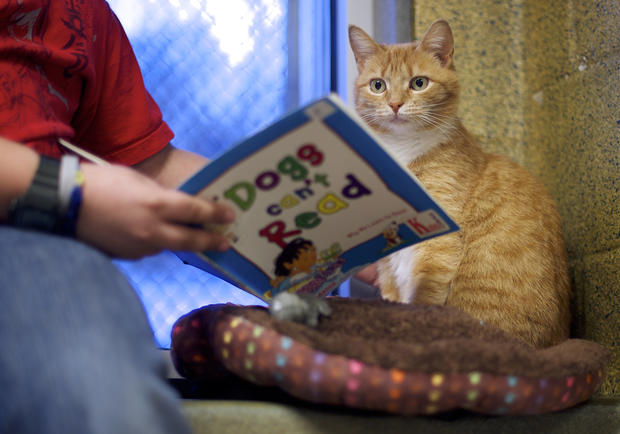 Kids read to cats