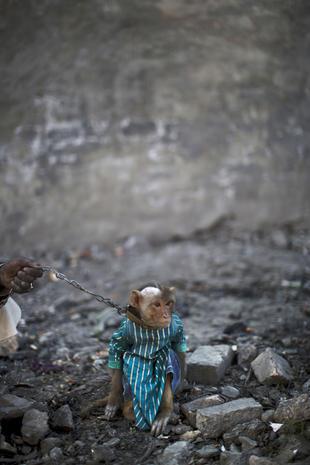 Pakistan's performing primates