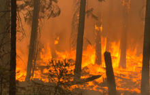 Yosemite Rim Fire sparks debate over dead trees