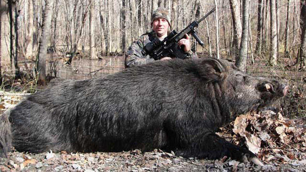 Jett Webb with the 500-pound wild hog that he says he killed in Bertie ...
