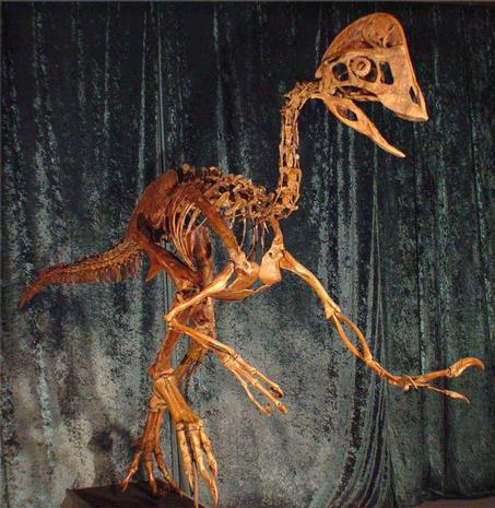 """""""Chicken from hell"""" dinosaur makes formal scientific debut"""