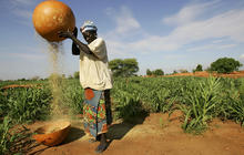 Climate change already impacting food supply, UN study shows