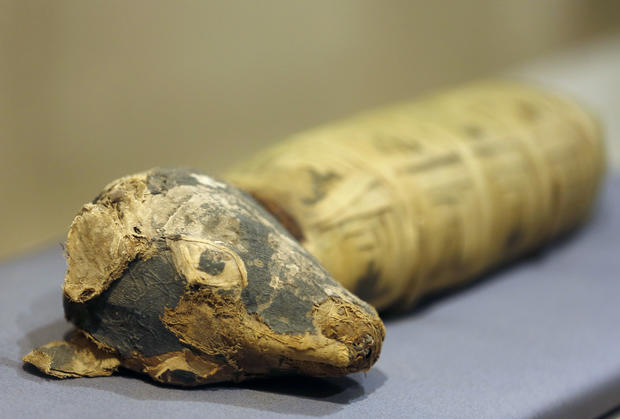 Still life: Ancient animal mummies