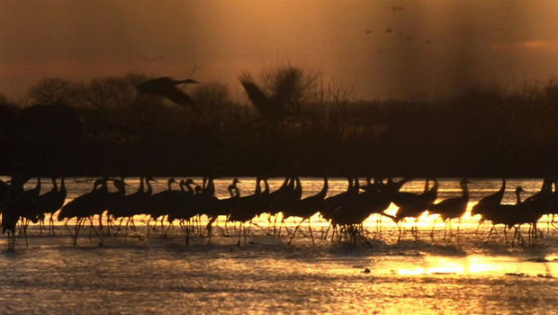 cranes-sunset.jpg