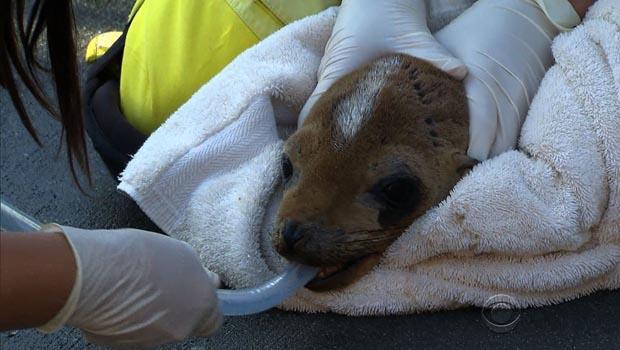 sea-lions-hoppie-feeding.jpg