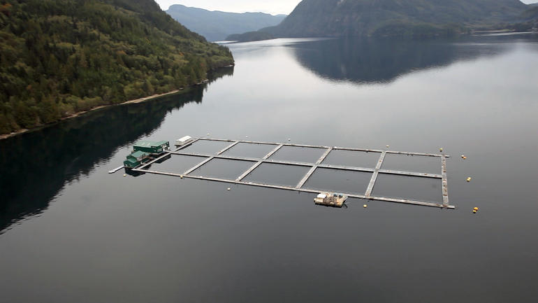 salmon-final-aerial.jpg