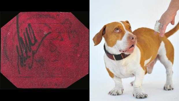 英国豚鼠邮票WALLE  - 世界 - 最丑的,dog.jpg