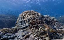 Explore the oceans with amazing underwater survey