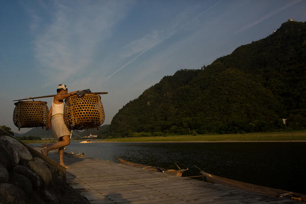 The bird fishermen of Japan