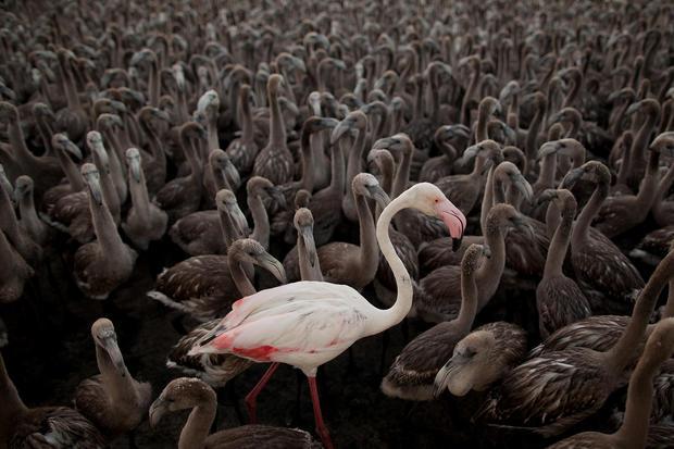 Flamingos in focus