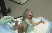 Video shows mental health studies on monkeys